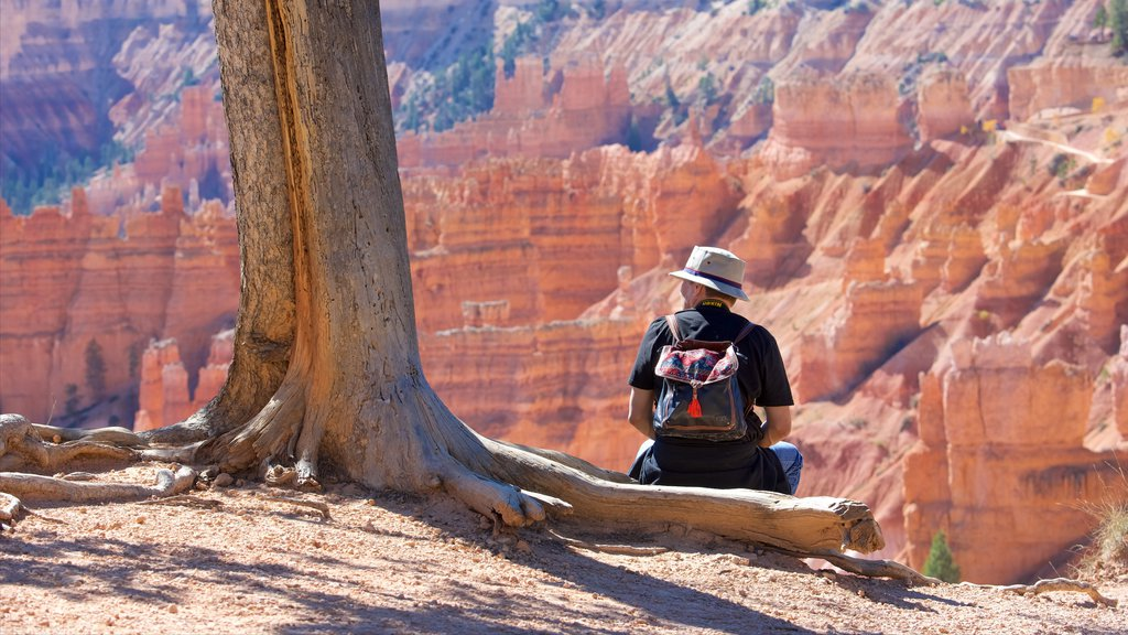 Bryce Canyon National Park showing tranquil scenes, desert views and a gorge or canyon