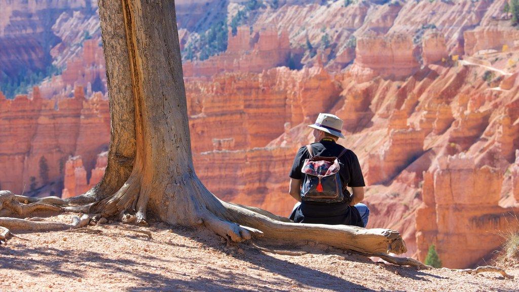 Bryce Canyon National Park ofreciendo escenas tranquilas, un barranco o cañón y vistas al desierto