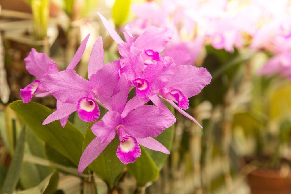 Orchidée - Serres du Jardin du Luxembourg..jpg