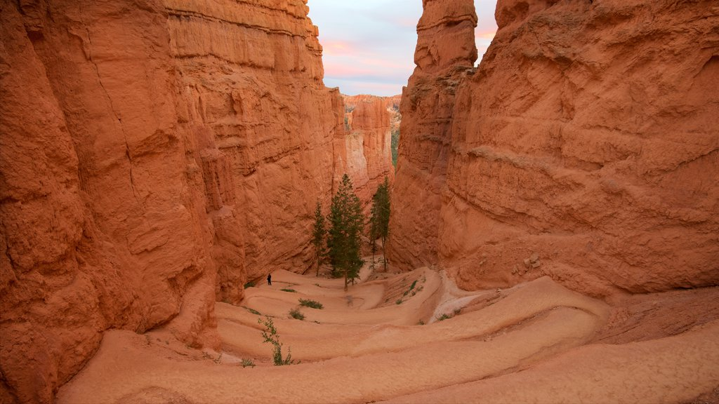 Bryce Canyon National Park featuring a gorge or canyon, a sunset and desert views