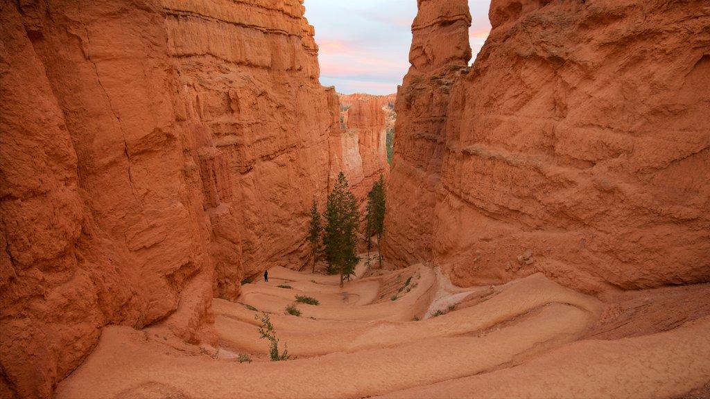 Bryce Canyon National Park que incluye escenas tranquilas, vistas al desierto y una puesta de sol