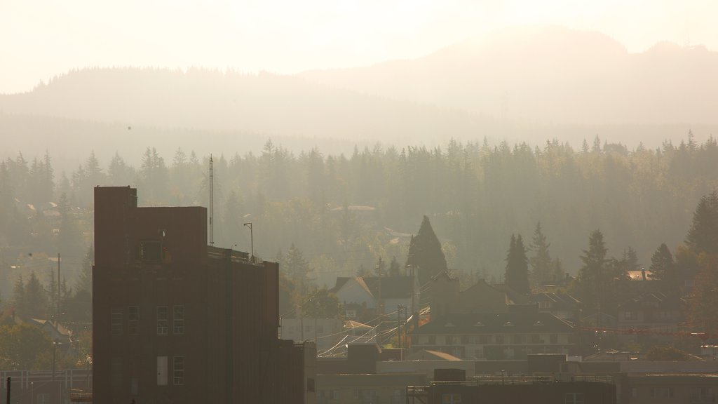Bellingham which includes a sunset, mist or fog and forest scenes