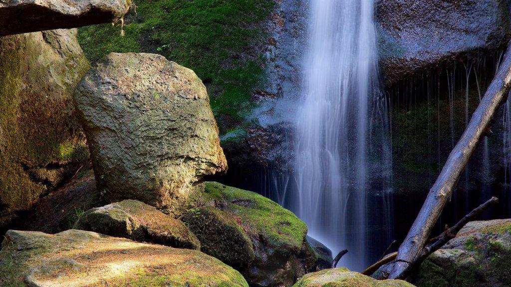 Whatcom Falls Park featuring a cascade
