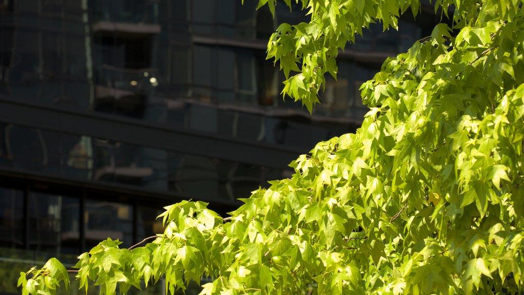 Bellevue featuring a park