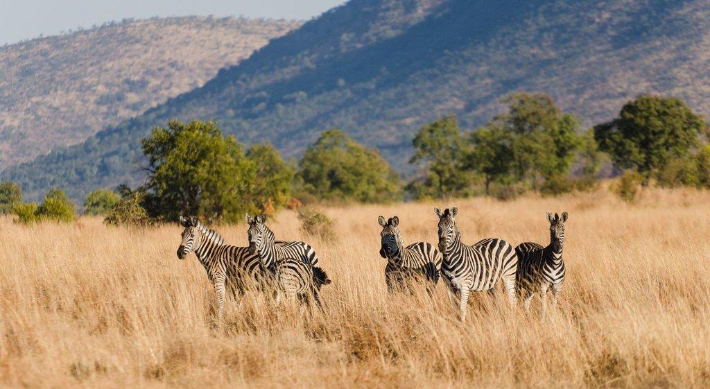 Johannesburg_Roadtrip_Pilanesberg National Park_Flickr.jpg