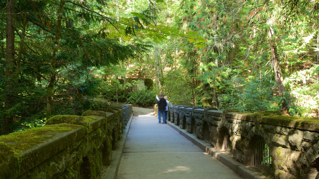 Whatcom Falls Park which includes a bridge and forest scenes