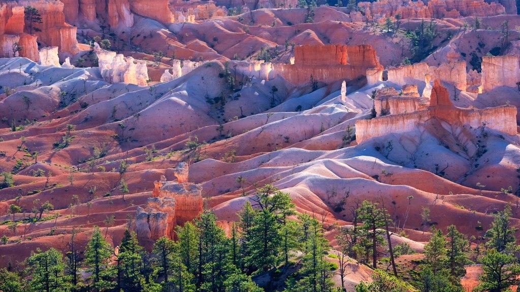 Sunrise Point mostrando escenas tranquilas, vistas al desierto y un barranco o cañón