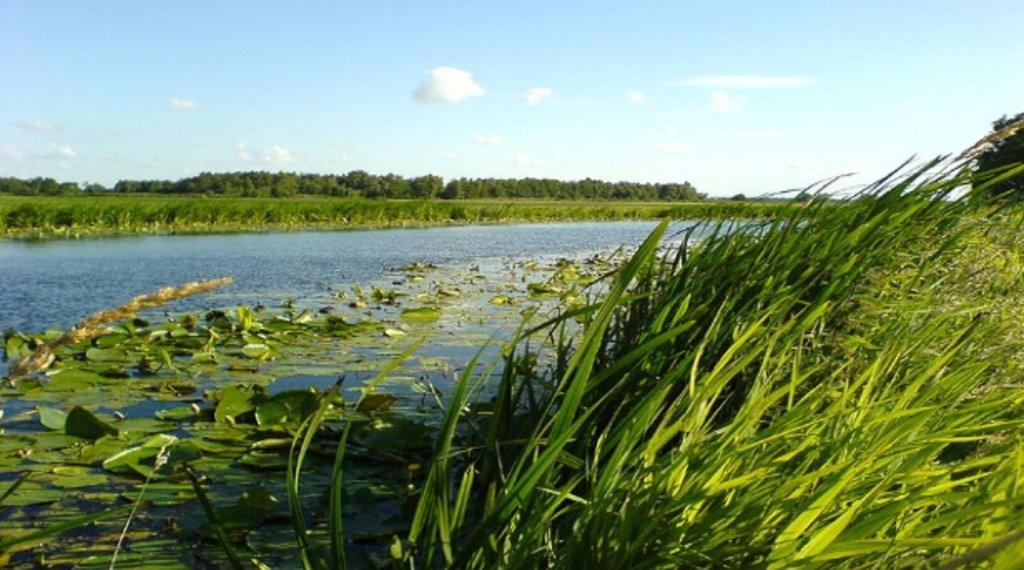 zuid-holland_natuur_groenehart.jpg