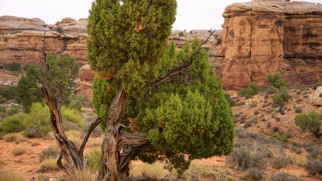 Moab showing tranquil scenes and a gorge or canyon