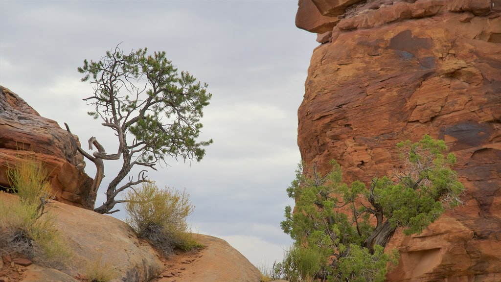 Moab which includes tranquil scenes