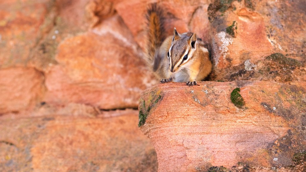 Zion National Park which includes tranquil scenes and cuddly or friendly animals
