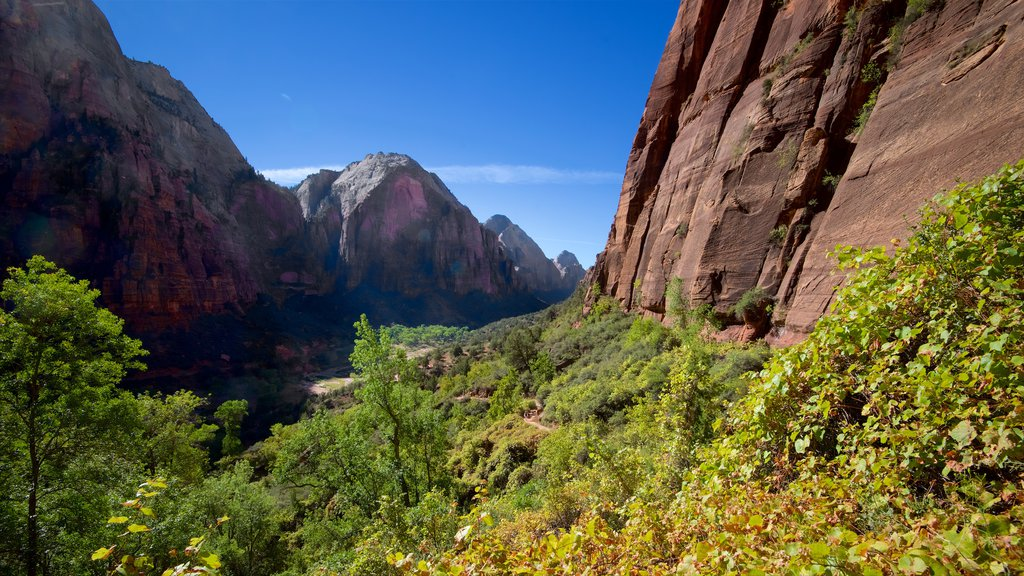 Zion National Park showing tranquil scenes, a gorge or canyon and landscape views