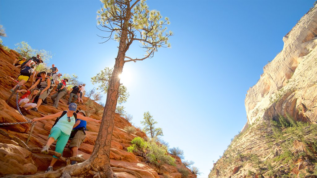 Zion National Park featuring tranquil scenes, a gorge or canyon and hiking or walking