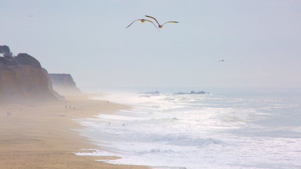 Half Moon Bay which includes a sandy beach, general coastal views and bird life