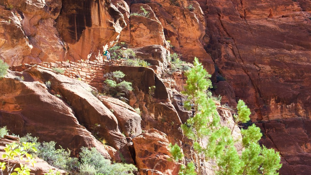 Zion National Park featuring hiking or walking and tranquil scenes