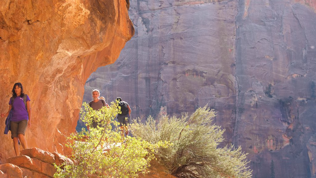 Zion National Park which includes tranquil scenes, mountains and hiking or walking