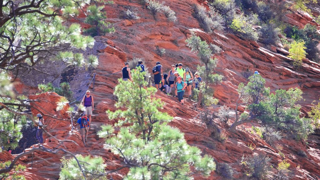 Angels Landing featuring a gorge or canyon and hiking or walking as well as a small group of people