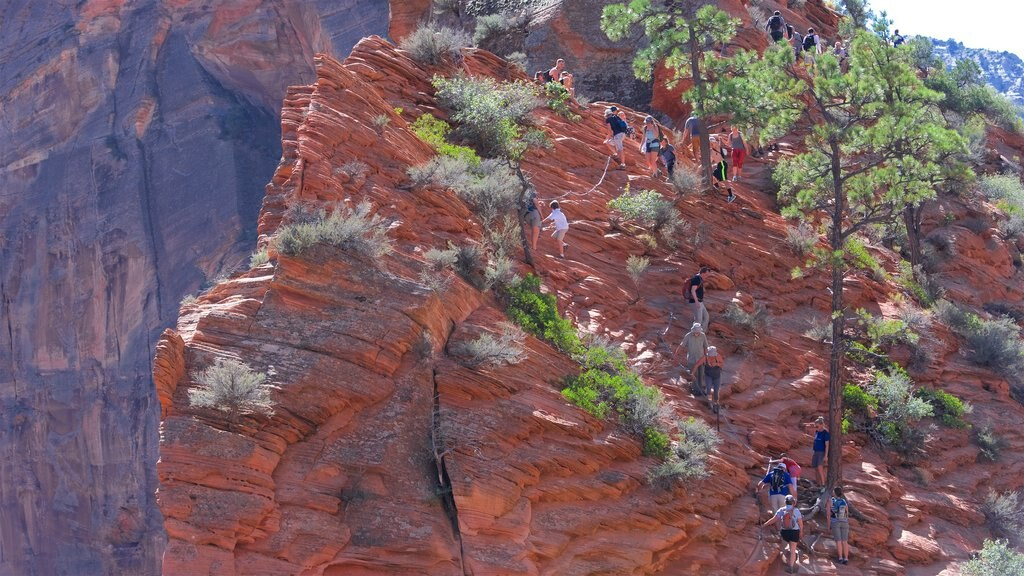 Angels Landing featuring a gorge or canyon and climbing as well as a small group of people
