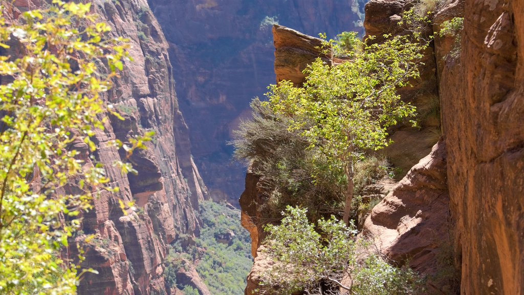 Zion National Park featuring tranquil scenes and a gorge or canyon