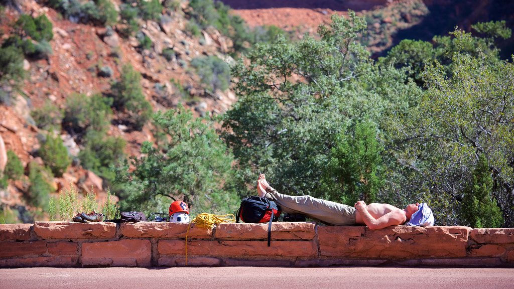 Zion National Park featuring tranquil scenes and hiking or walking as well as an individual male