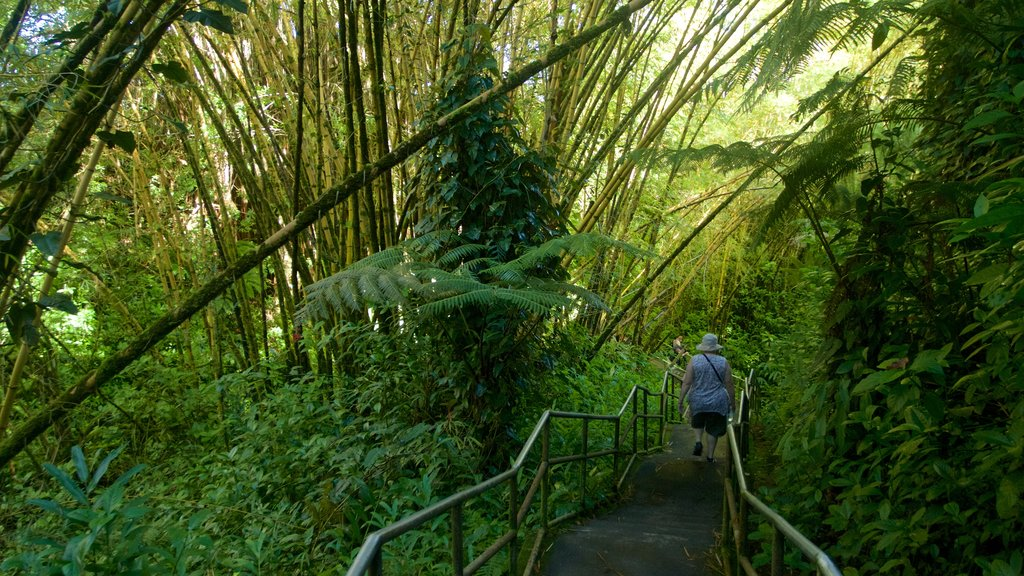 Akaka Falls which includes hiking or walking and rainforest as well as an individual femail
