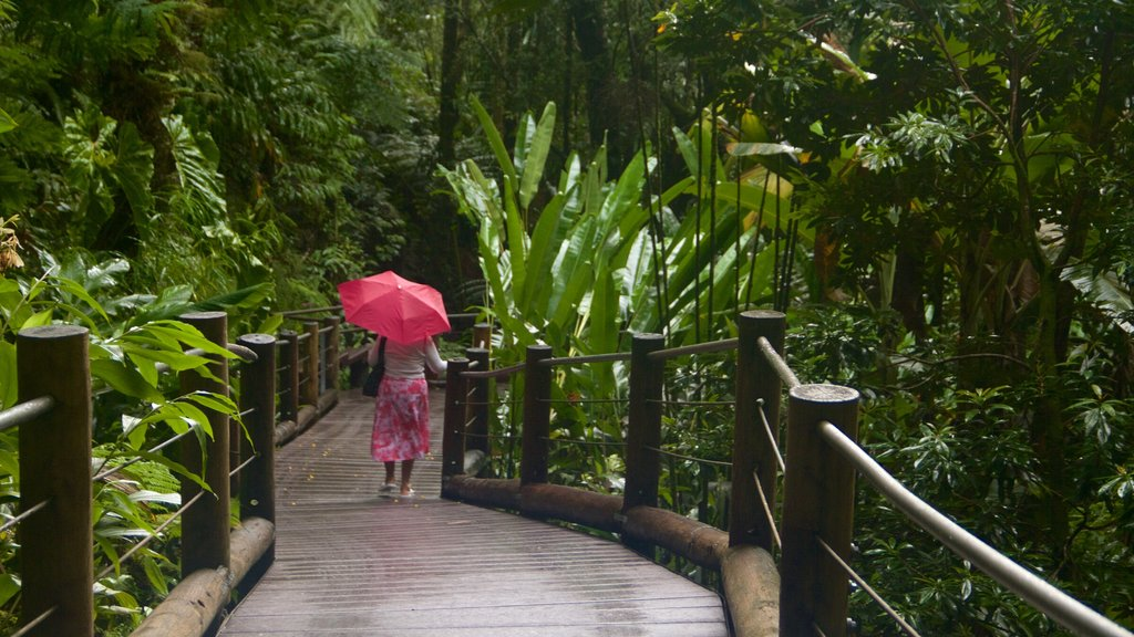 Hawaii Tropical Botanical Garden showing a park as well as an individual femail