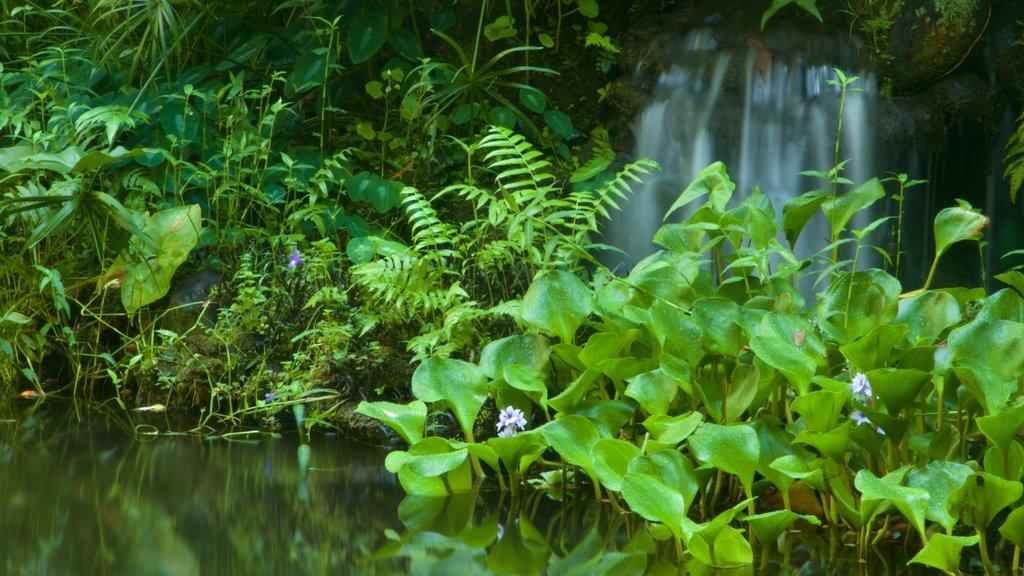 Hawaii Tropical Botanical Garden which includes a park and a cascade