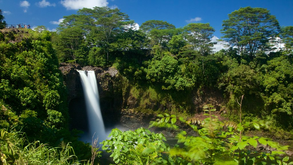 Hilo showing a cascade and a garden