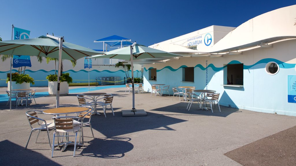 Clearwater featuring cafe scenes