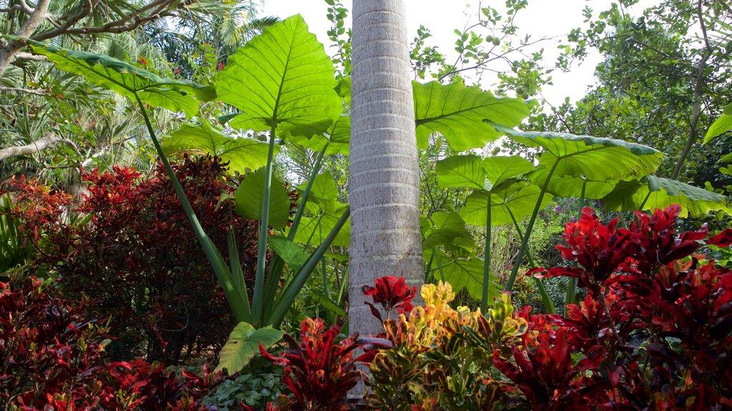 Sunken Gardens ofreciendo un jardín