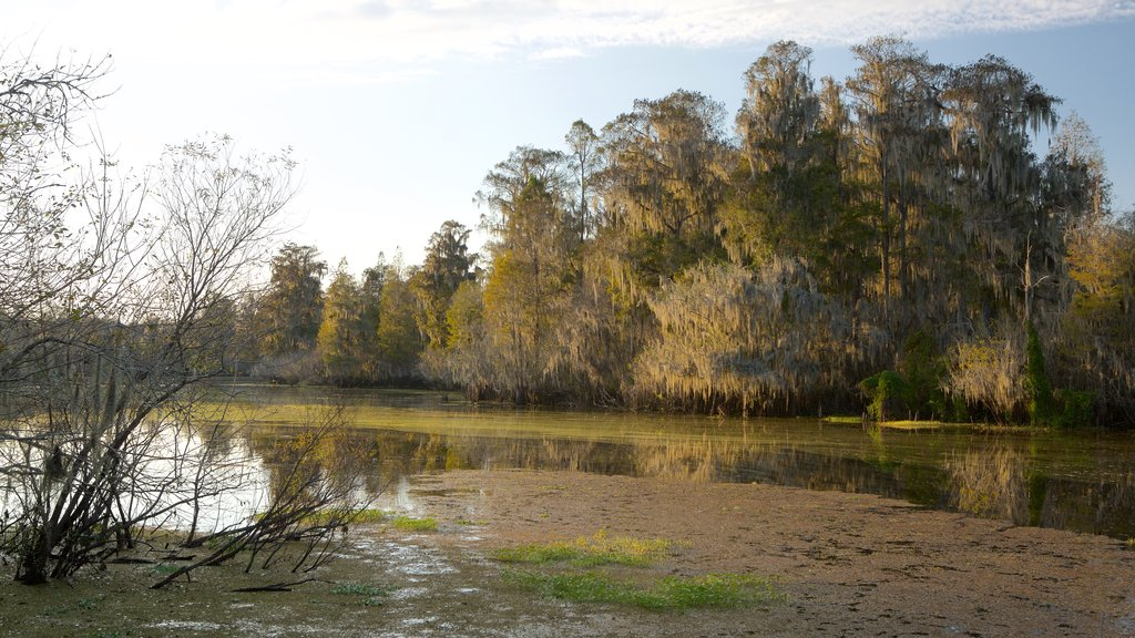Lettuce Lake Park showing a lake or waterhole