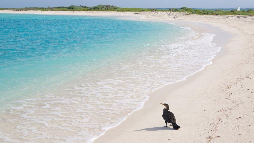 Dry Tortugas National Park featuring bird life, a beach and general coastal views