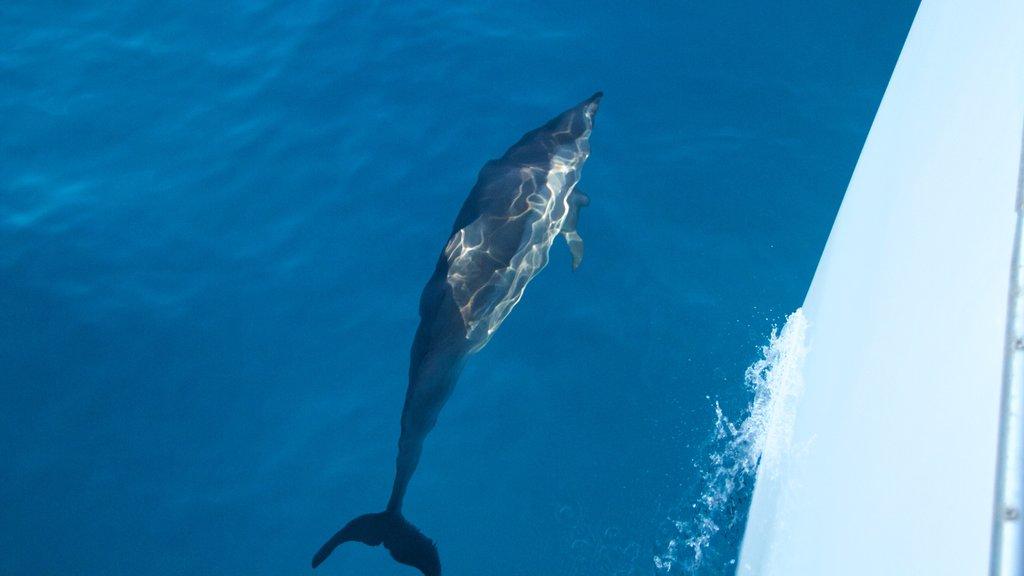 Kauai Island which includes general coastal views and marine life
