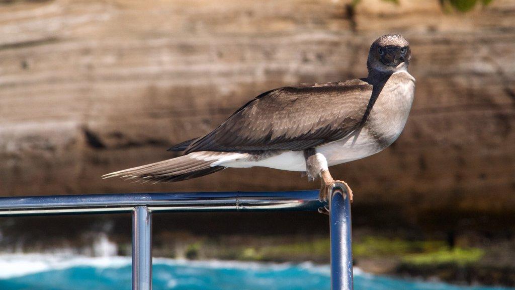 Kauai Island which includes bird life and general coastal views