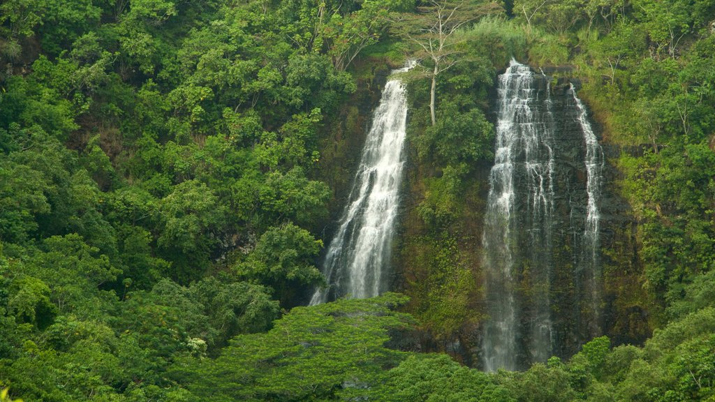 Kapaa which includes forest scenes and a waterfall