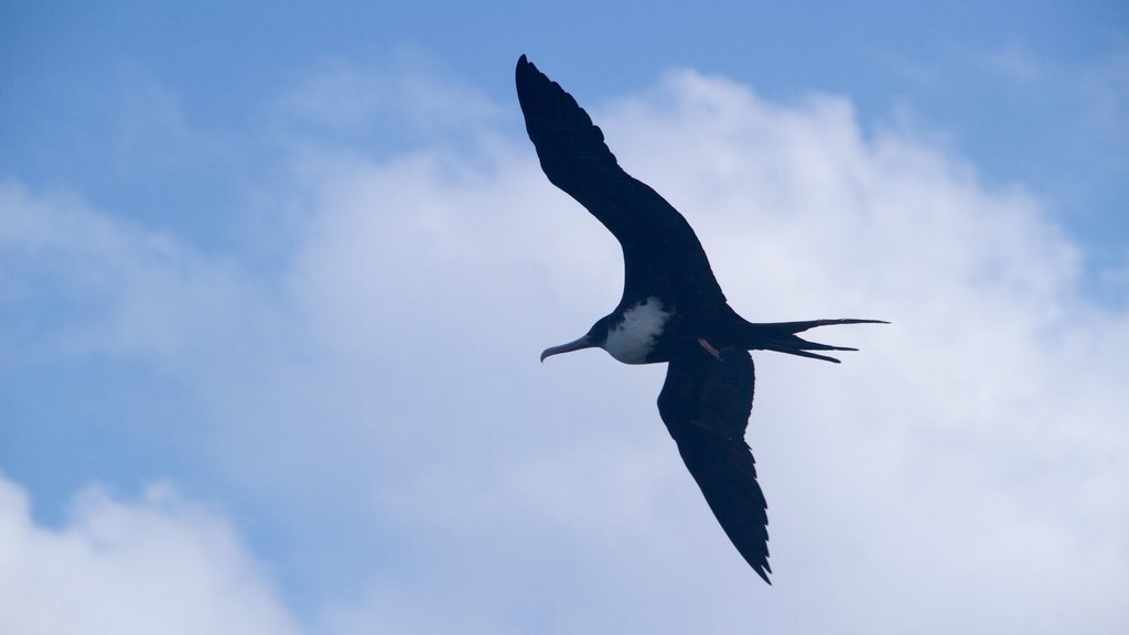Kilauea Lighthouse featuring bird life