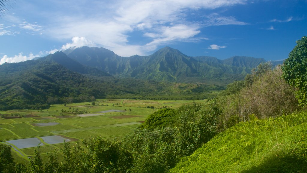 Hanalei Valley Lookout which includes tranquil scenes and mountains
