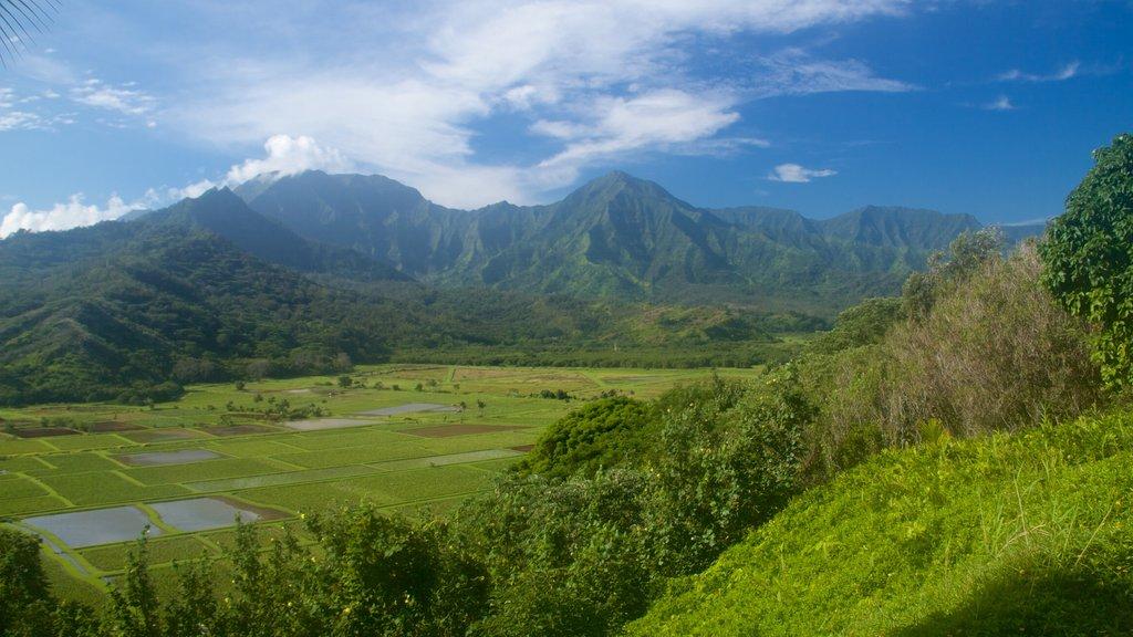 Mirador de Hanalei Valley mostrando escenas tranquilas y montañas