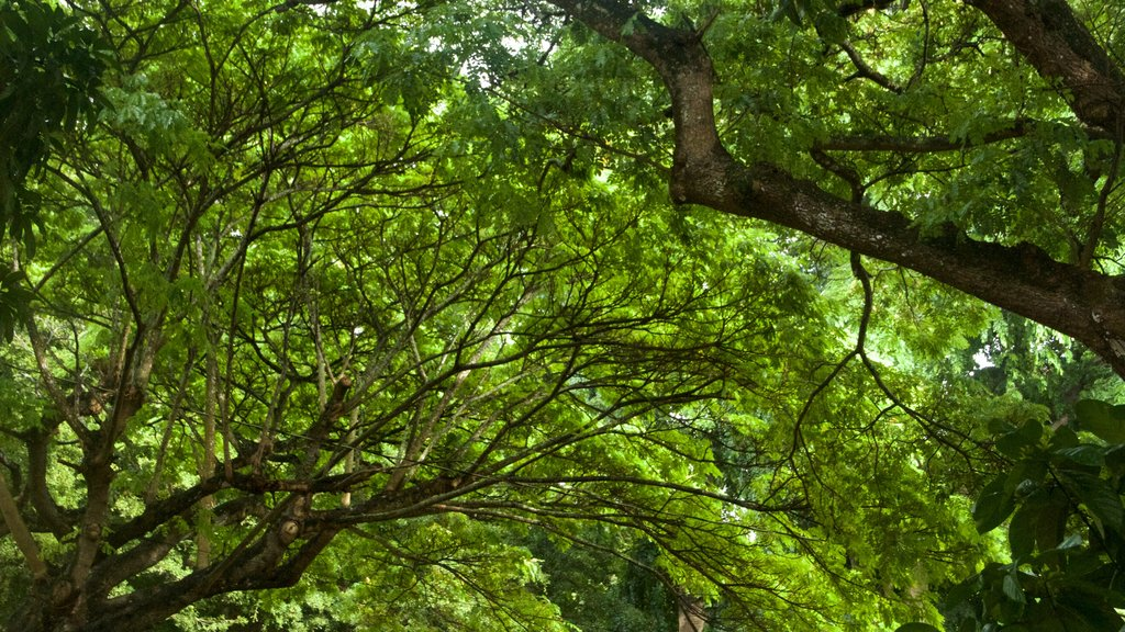 Allerton Botanical Garden featuring forests