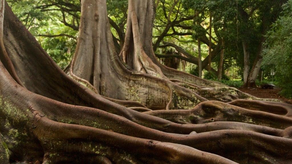 Allerton Botanical Garden showing a garden and forests