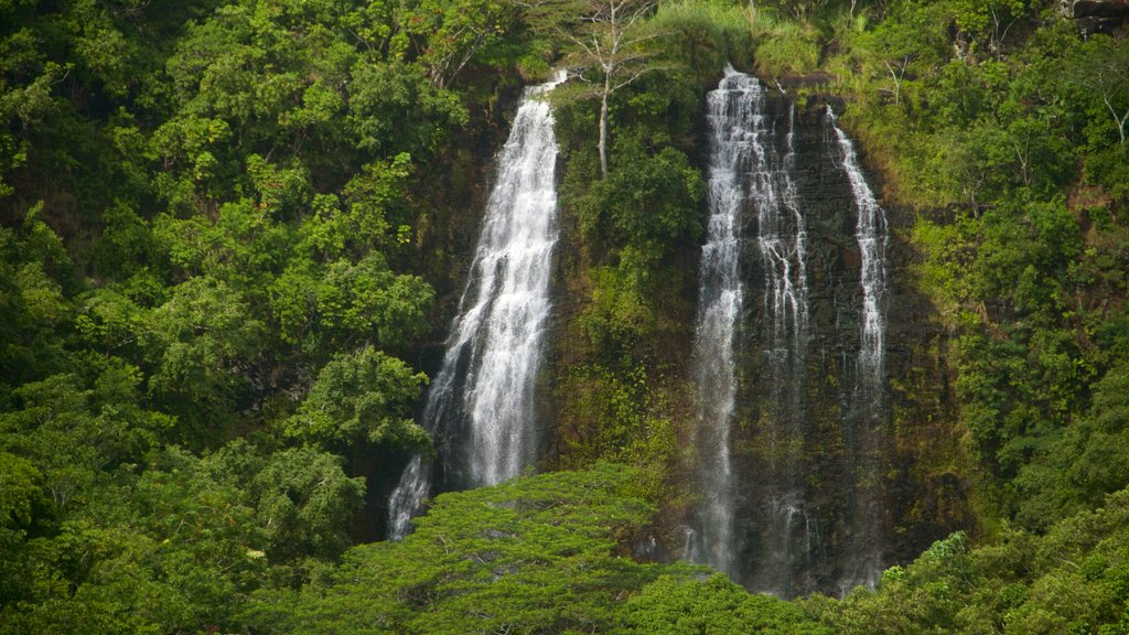 Opaekaa Falls which includes a waterfall and forests