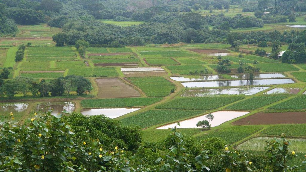 Mirador de Hanalei Valley ofreciendo tierras de cultivo