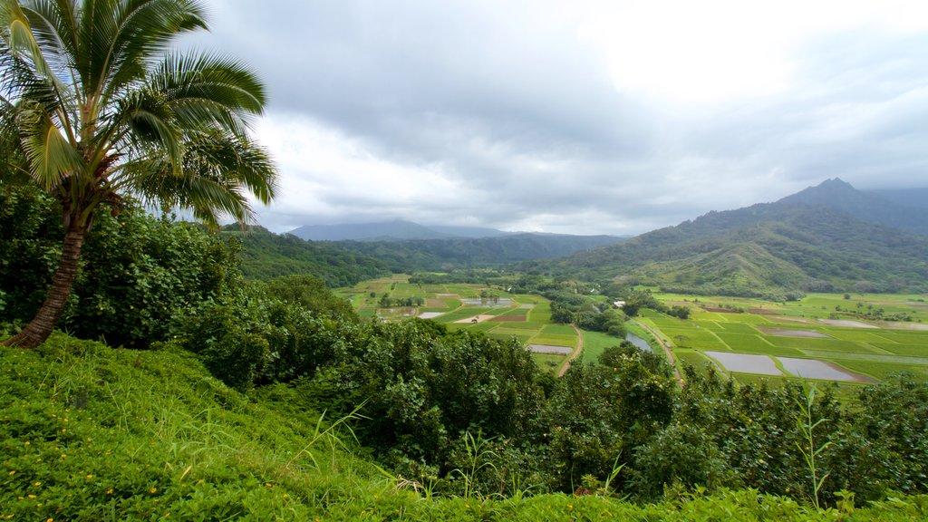 Mirador de Hanalei Valley ofreciendo montañas