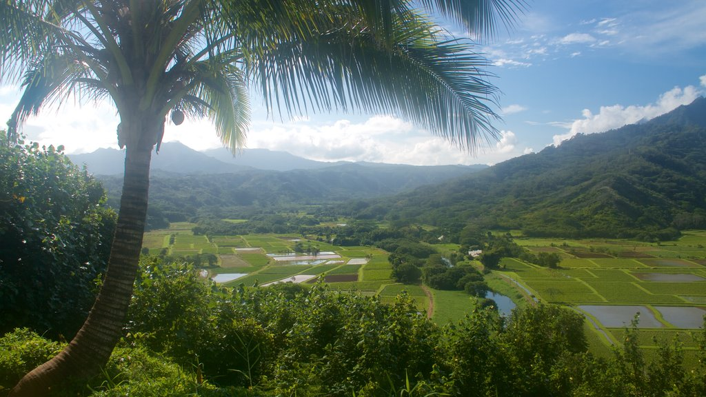 Hanalei Valley Lookout featuring mountains