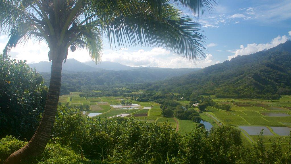 Mirador de Hanalei Valley que incluye montañas