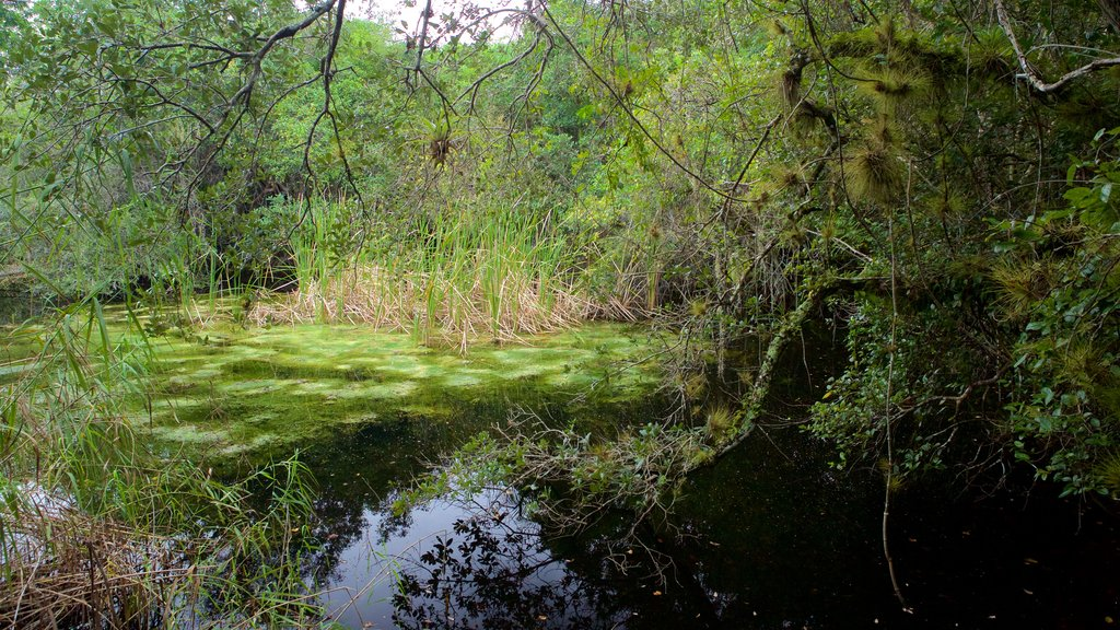 Everglades National Park which includes forests and a pond as well as a couple