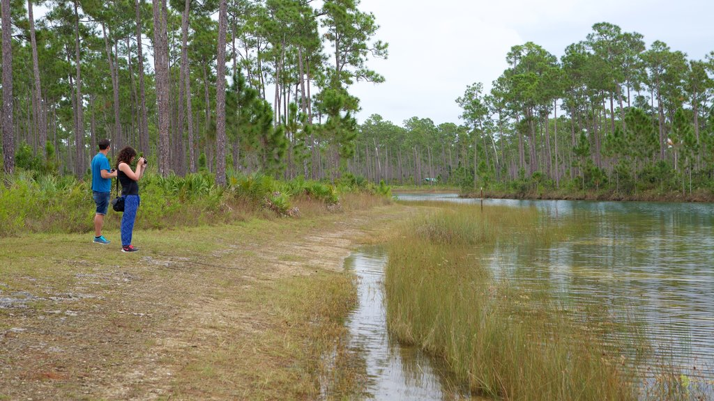 Everglades National Park showing forests and a lake or waterhole as well as a couple