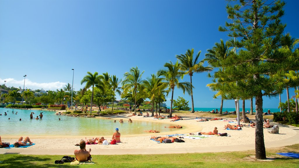 Airlie Beach Lagoon which includes general coastal views, a luxury hotel or resort and tropical scenes