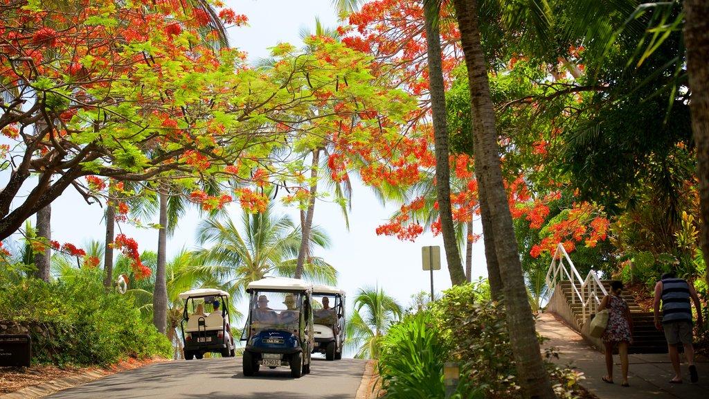 Hamilton que incluye flores silvestres, escenas urbanas y escenas tropicales