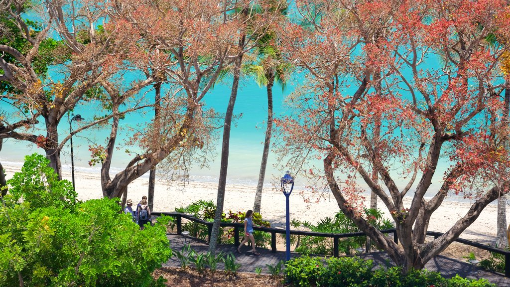 Airlie Beach which includes a park and general coastal views